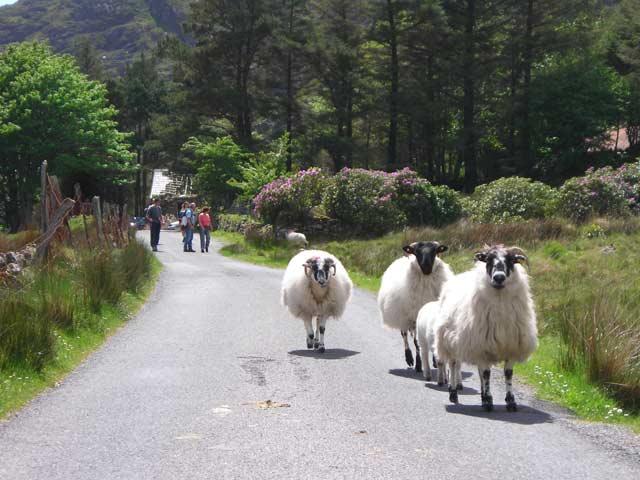 Irlande - Kerry - Cottage Kenmare avec traversée maritime incluse