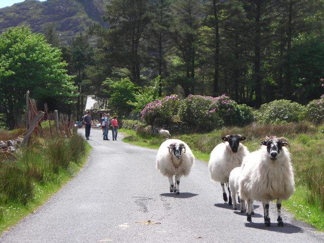 Irlande - Kerry - Cottage Sneem avec traversée maritime incluse