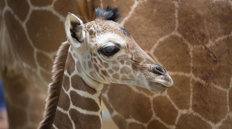 France - Poitou Centre Loire - Zoo de Beauval - Road Trip en Camping-Car Capucine: Les Châteaux de la Loire