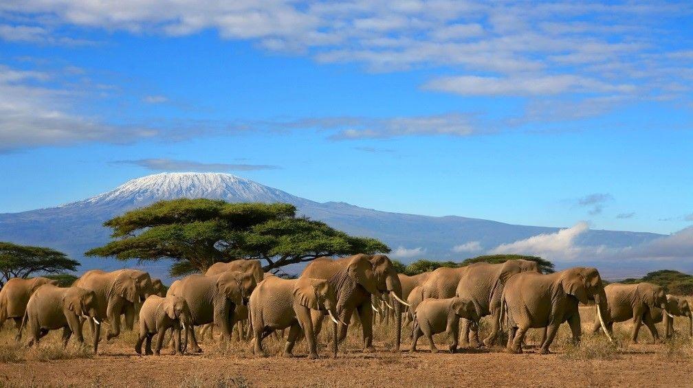 Les incontournables du Kenya avec séjour Balnéaire, 13 jours / 10 nuits, Départs garantis à partir de 04 participants - voyage  - sejour