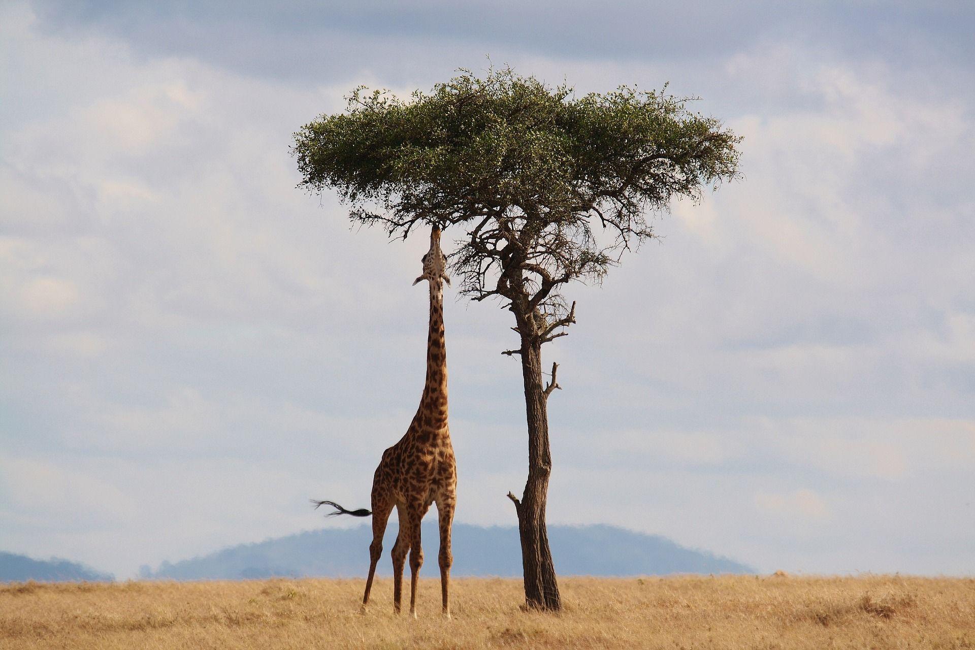 Les incontournables du Kenya, 10 jours / 07 nuits, Départs garantis à partir de 02 participants